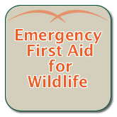 Emergency First Aid for Wildlife