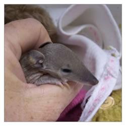 Injured Marsupials